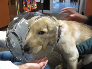 unlucky-dog8