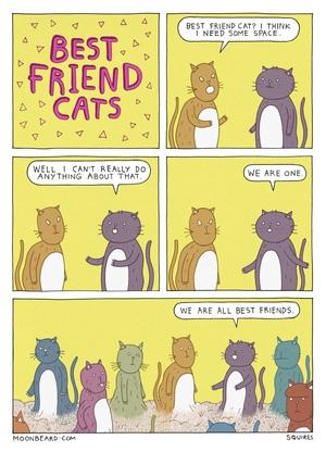 2015-05-14-best-friend-cats-21d