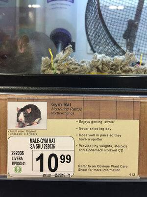 pet-shop-fake-name-prank-obvious-plant-jeff-wysaski-2