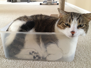 water-cat1
