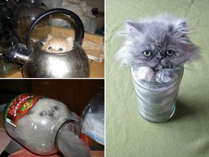 water-cat16