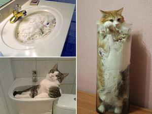 water-cat3