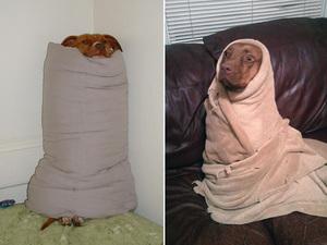 burrito-dog11