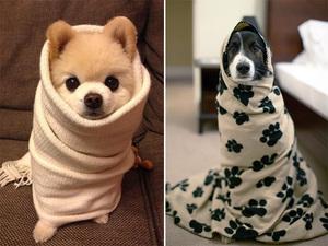 burrito-dog13
