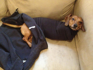 burrito-dog2