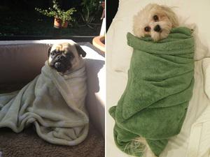 burrito-dog3
