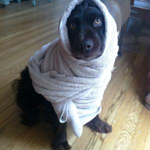 burrito-dog4