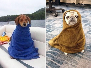 burrito-dog5