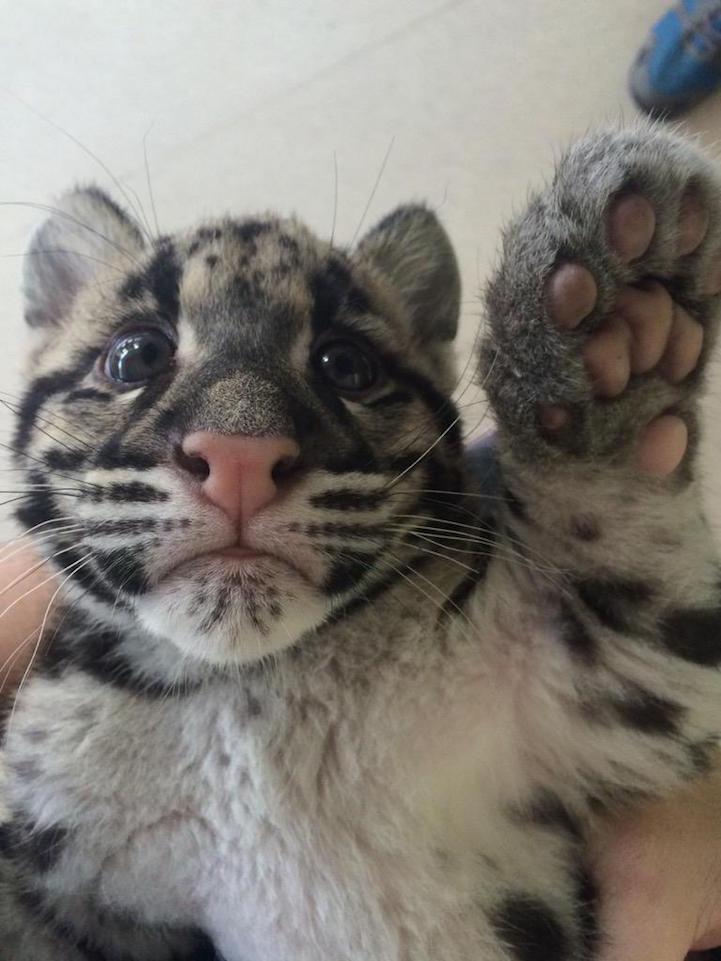 Cute13