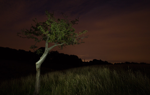 686x436_Phoenix-Park_Tree_-Alan_Currie