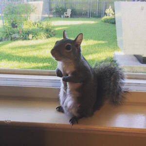 jillsquirrel6