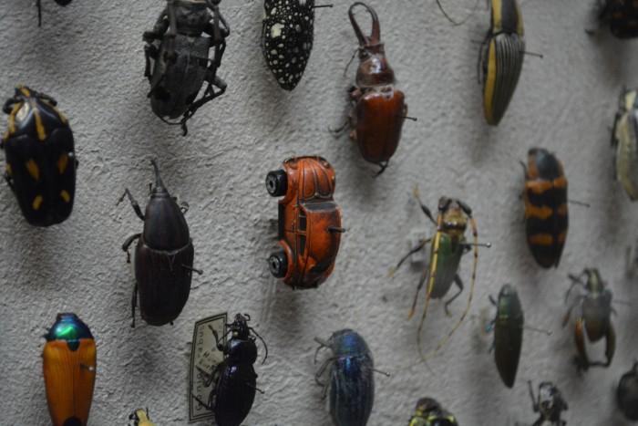 VW-Bug-in-Insect-Collection