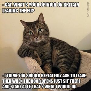 brexit-cat