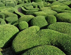topiary-8