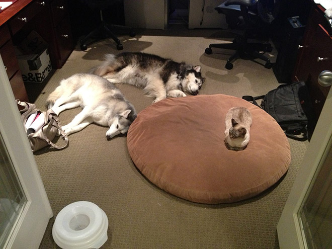 dog-bed13