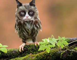 owl-cat1
