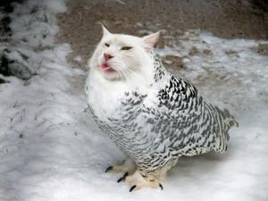 owl-cat10