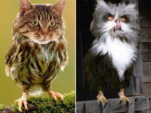 owl-cat14