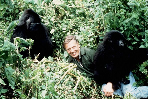 david-attenborough-with-rwanda-mountain-gorillasdavid-attenborough-with-rwanda-mountain-gorillas