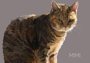 mimiweb1-copy