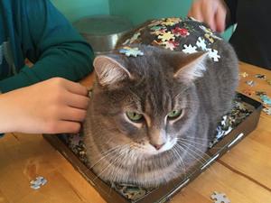 mean-cat12