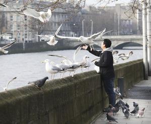 AO9Z6512 Feeding Birds_90502678