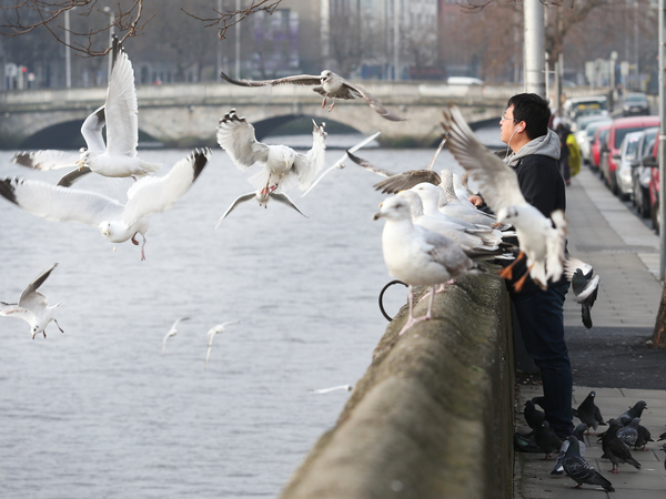 13/2/2017. Wei Zhao feeds Seagulls and Piegons along Ormond Quay Upper Dublin on a cold morning, he says he feeds the birds most mornings on his way to work. Photo: RollingNews.ie