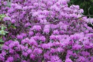 April-flowering-016