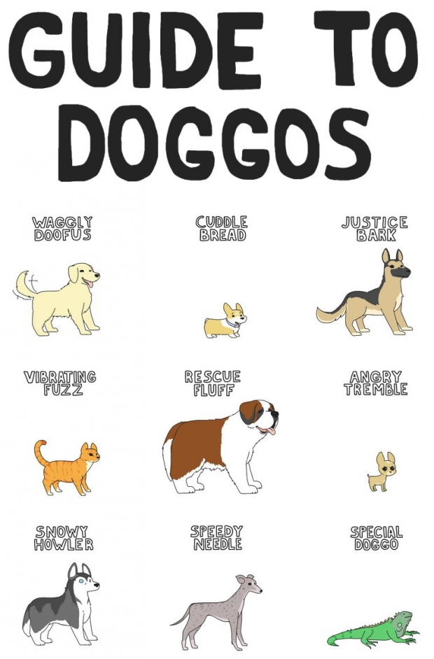 small_guide_to_doggos